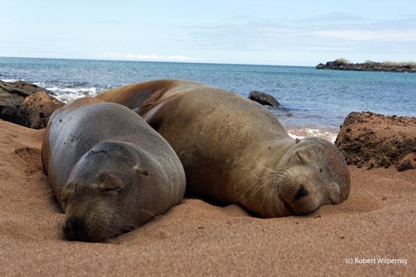 sea-lions