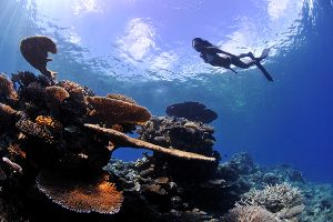 diving-in-maldives-01