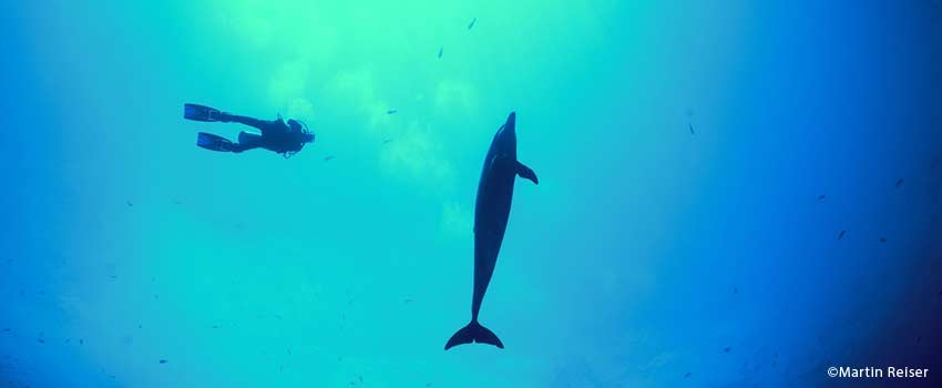 A dolphin while diving in Fakarava
