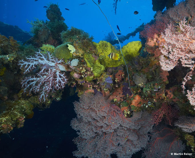 corals encrusted on a wreck