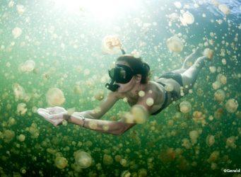 Snorkelling in Jellyfish Lake Palau