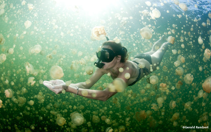 Snorkelling in Jellyfish Lake Palau