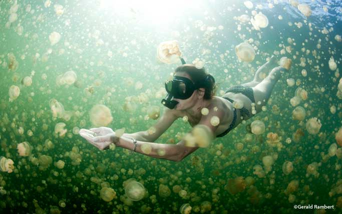 Snorkelling in Jellyfish Lake, Palau