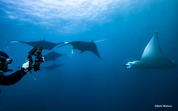 Photographer with mantas